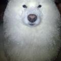 和狗狗在寒冷的冬天散步之後,發現牠…